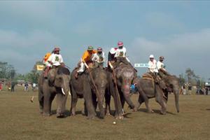 elephant polo in thailand