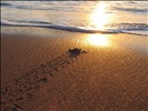 turtle_freedom2