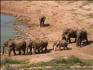 Elephants At The Waterhole II