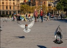 Mañana de otoño en la Plaza Catalunya