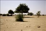 Camel Trek in the Thar Desert, Rajasthan, India