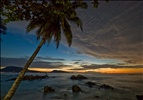 Palm tree at dawn, Patong beach