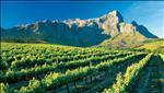 franschhoek winelands