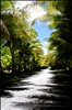 Road to Laura Beach
