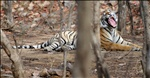 Her Royal Highness, Princess of Ranthambhore