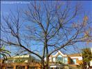 f6 house门口的树
