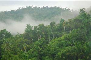 highland cloud forest