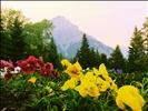 Cascade Rock Garden
