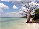 lovely tree on Sanibel Island