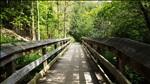 way, forest, bridge