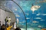 Barcelona Aquarium-15