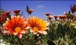 Wonderland_flowers