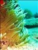 Family Cruise 2009,diving Saint Martin tentacles