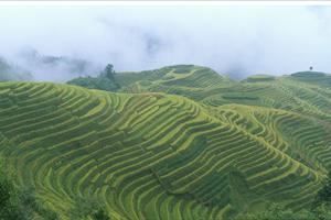 terraces of yangshuo