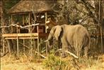 elephant in chitabe camp