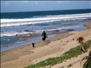 """Surfer and dogs at """"J-Bay"""" SA"""