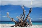 Pamilacan Island, Bohol