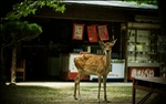 2775 : One day, I met deer! #2