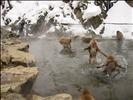 Yudanaka Hot spring