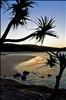 Pandanus Palm Silhouette, Cylinder Beach