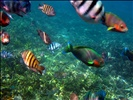 Fish and Coral 2