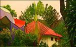 9-15-07 Boquete Panama 1671 - Travellers Palm