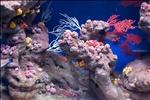 Barcelona Aquarium-1