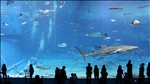 Kuroshio Sea - 2nd largest aquarium tank in the world on Vimeo