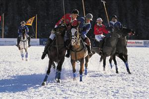 polo in the snow