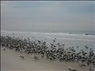 Reunión de aves