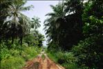Bokouélé Road - Congo