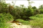 Port de foret innondée - Congo