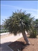 Luqa Airport palm tree