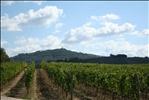 1307 - Montalcino Winery