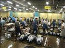 Tokyo Fish Market-9