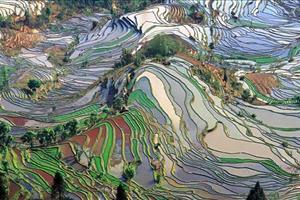 yunan terrace fields