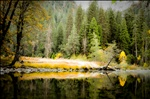 Yosemite : river reflections