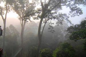 danum valley canopy walkways