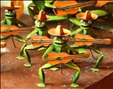 Crazy guitar strumming frogs on Isla Mujeres
