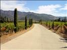 DSC20197, Castello di Amorosa Winery, Napa Valley, California, USA