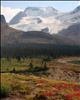 The Columbia Icefield from near Wilcox Pass in Jasper National Park