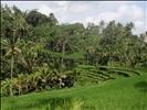 Rice terraces at Gunung Kawi