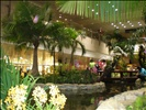 Garden Inside Changi Airport