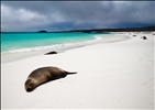 Sea Lions - Gardner Bay - Espanola Island - Galapagos Islands (11)