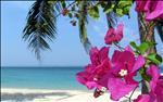 Flowers, Pulau Kapas