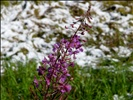 Canada - BC - 07 - between seasons in Kootenay National Park