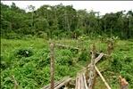 Manu National Park-60