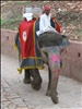 India - Colours of India - 013 - Painted elephant at Jaipur