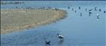 043 Various Shorebirds - Ding Darling NWR Sanibel Island FL