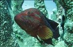 Makassar Fishing Area